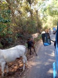 Road in Goa