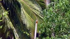 Kingfisher in Agonda, Goa